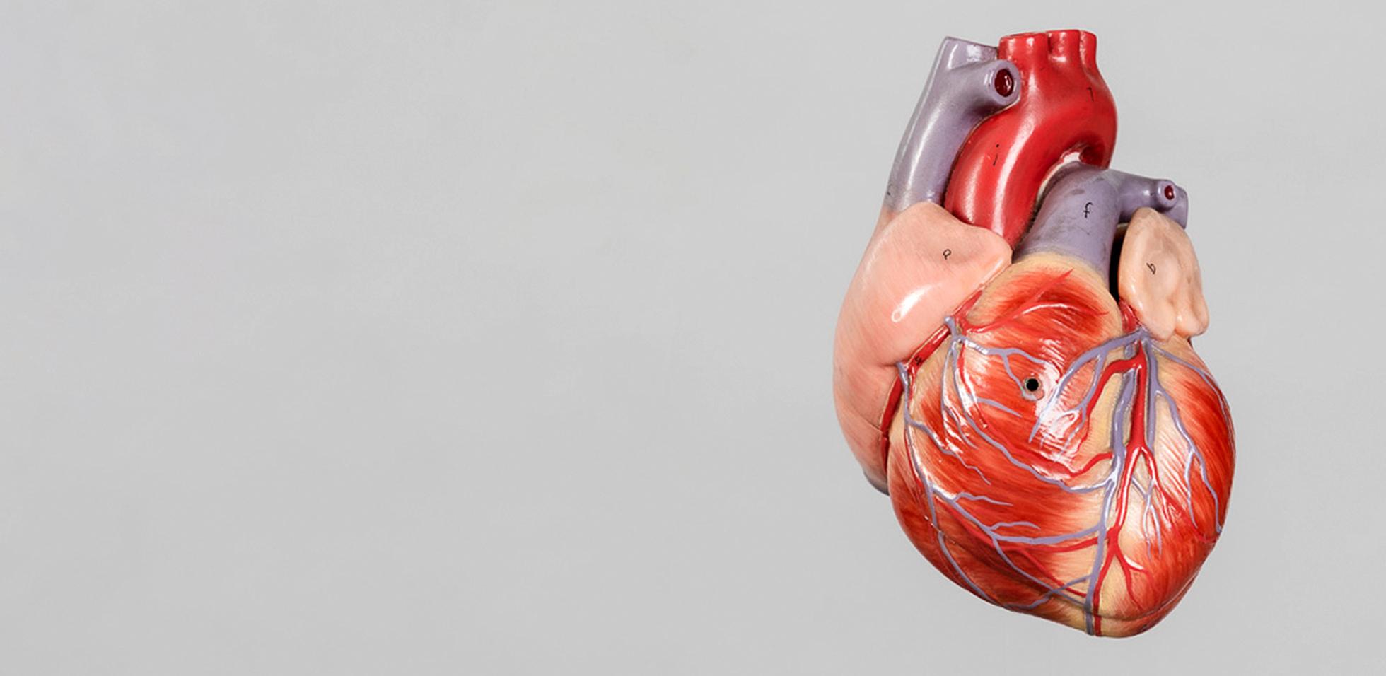 Darstellung Herz