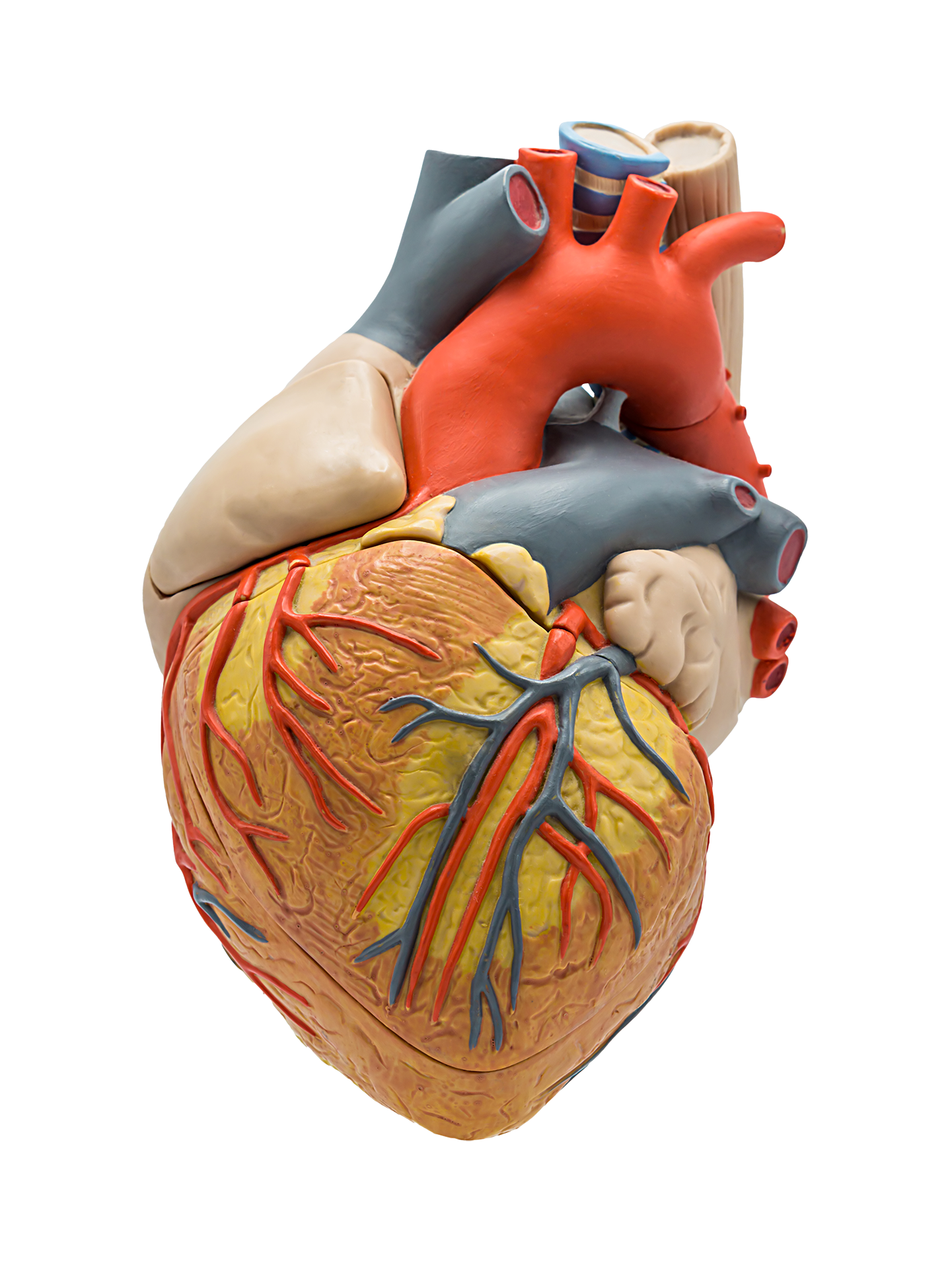 Herzchirurgie Schweiz